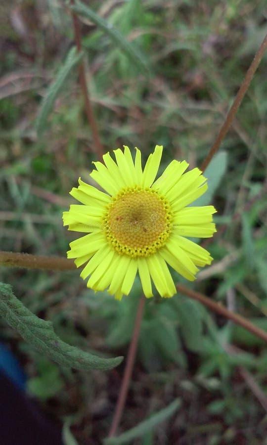 Bloemen in landbouwbedrijf stock foto's