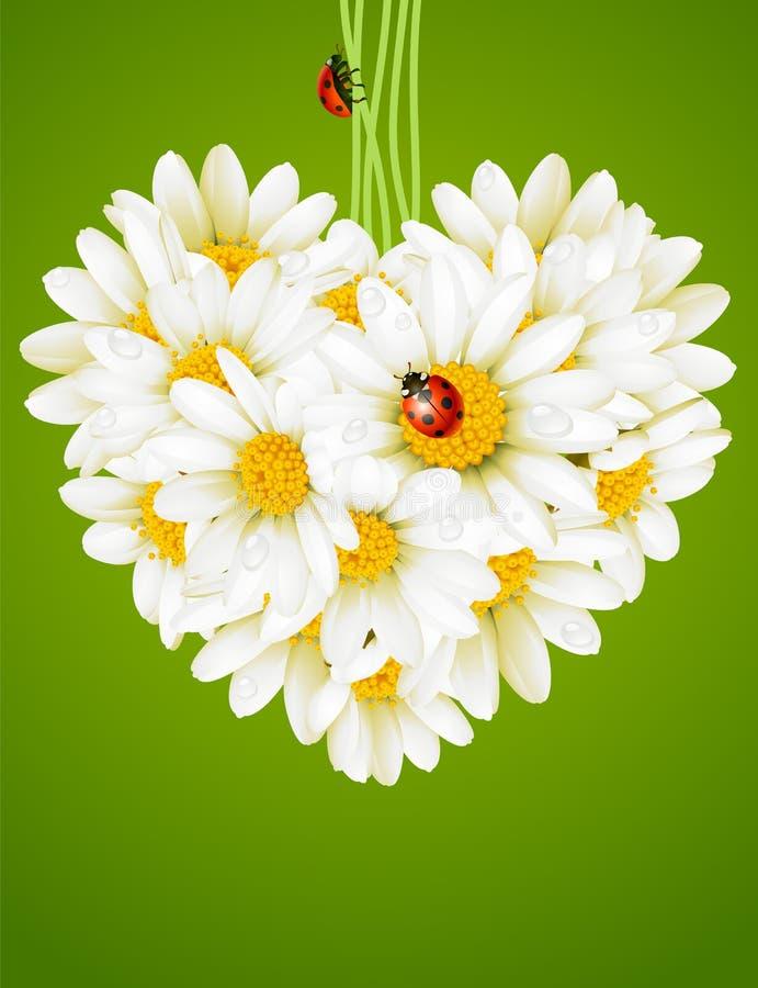 Bloemen liefdekaart (kamillehart) vector illustratie