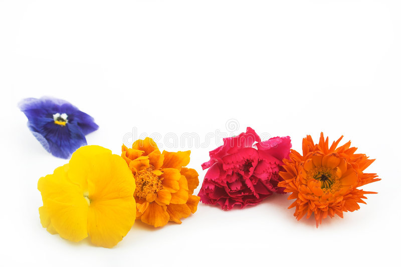 Bloemen in lijn royalty-vrije stock afbeelding