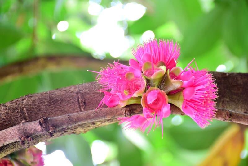 Bloemen` Linden Field ` naam, vage achtergrond royalty-vrije stock afbeelding