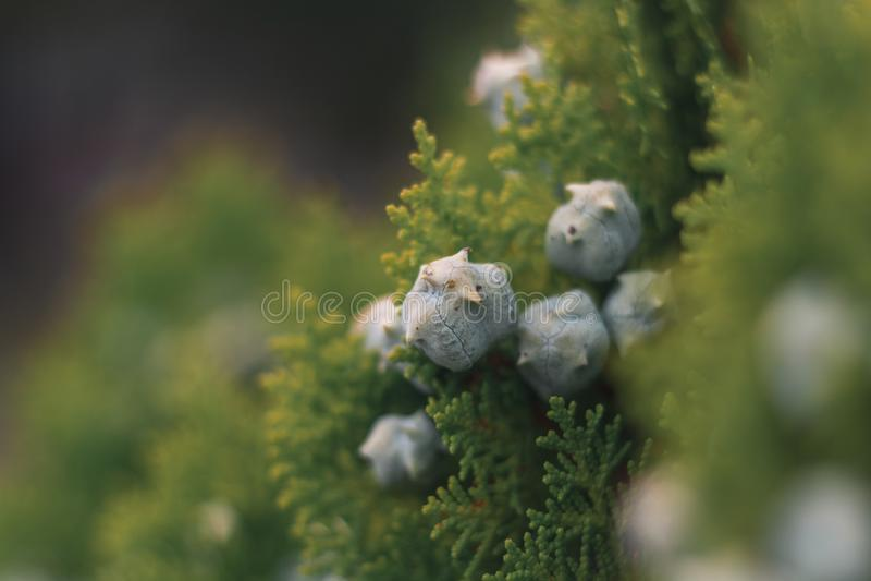 Bloemen in macro stock afbeelding