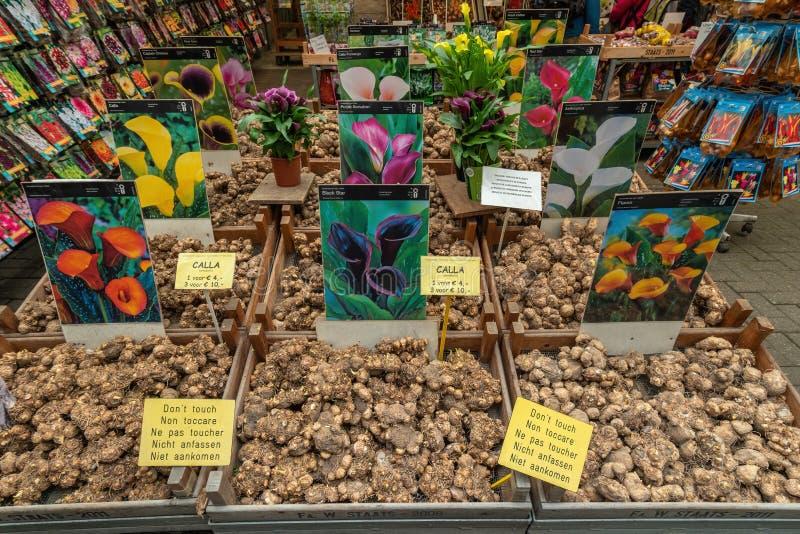 Bloemen Market Amsterdam Olanda fotografia stock