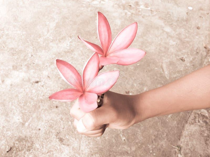 Bloemen met hand stock foto's