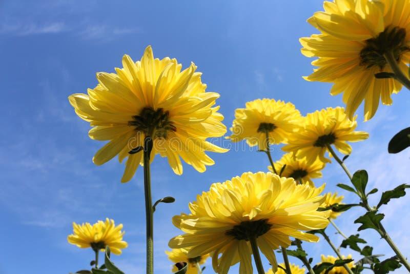Bloemen met hemel stock afbeelding