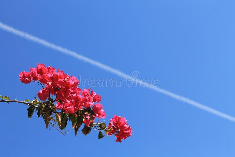 Bloemen met hemelachtergrond stock afbeelding