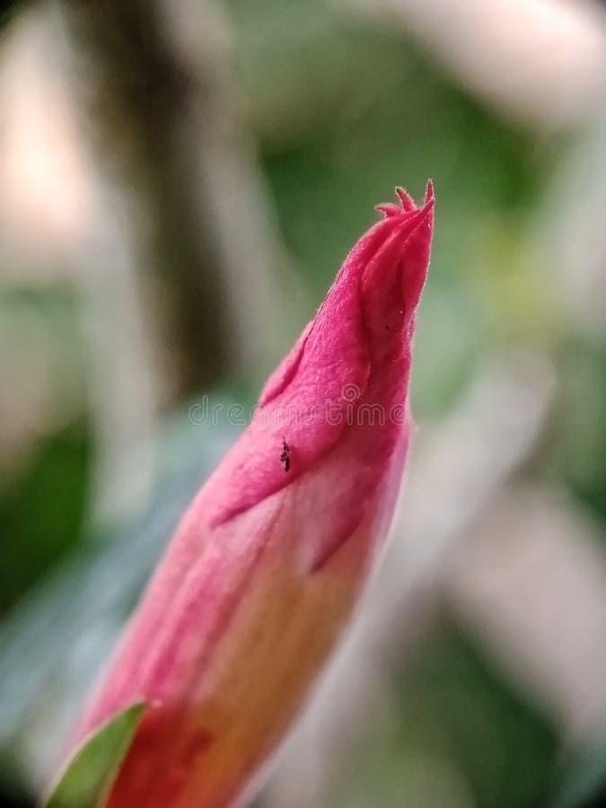 bloemen met schoonheid royalty-vrije stock afbeelding