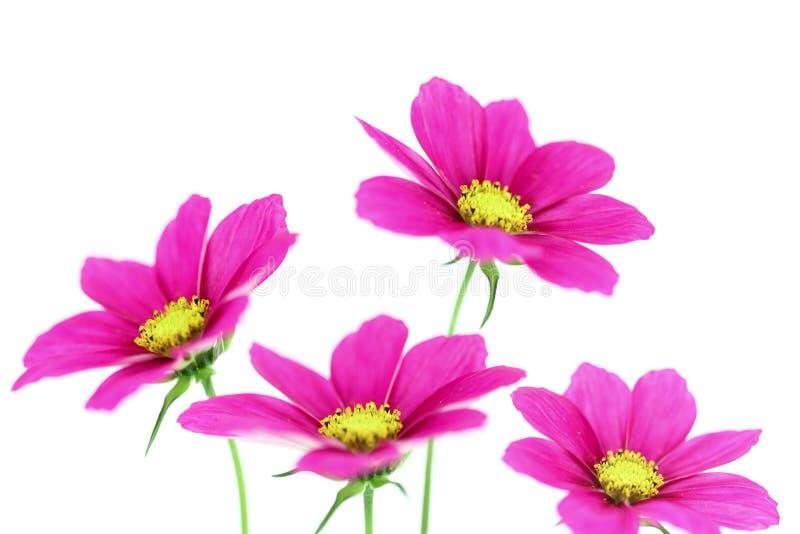Bloemen met witte achtergrond royalty-vrije stock foto