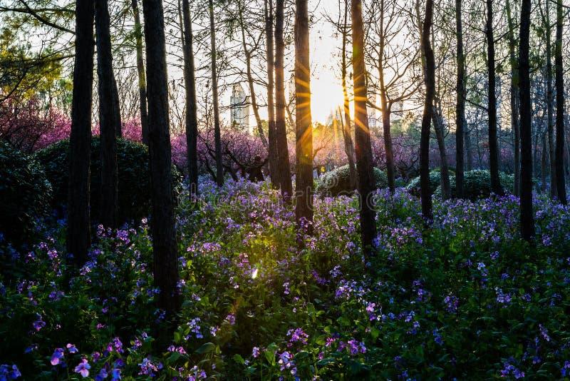 Download Bloemen Met Zonsondergang Bij Eeuwpark In Shanghai Stock Afbeelding - Afbeelding bestaande uit bloesems, groen: 39117351