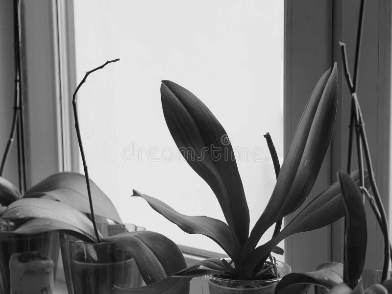 Bloemen in mijn ruimte royalty-vrije stock fotografie