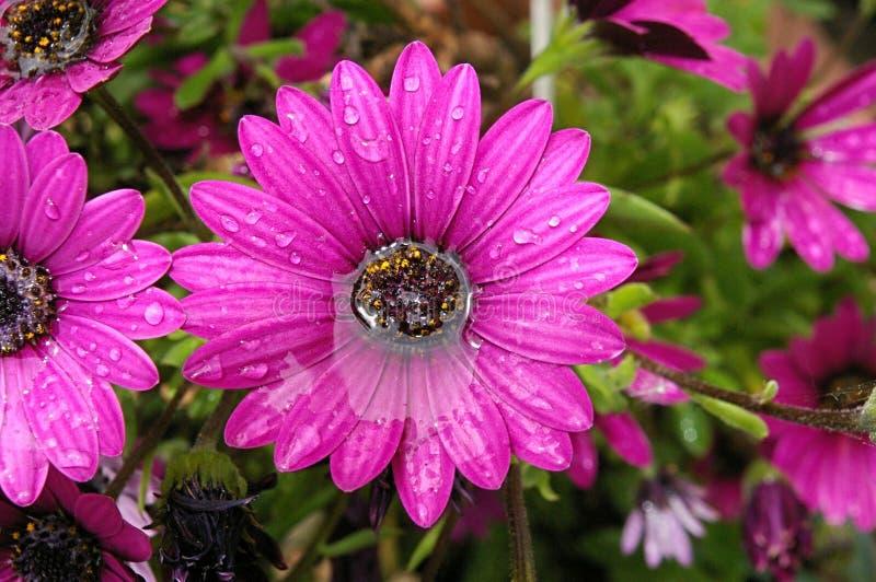 Bloemen na Regen royalty-vrije stock afbeelding