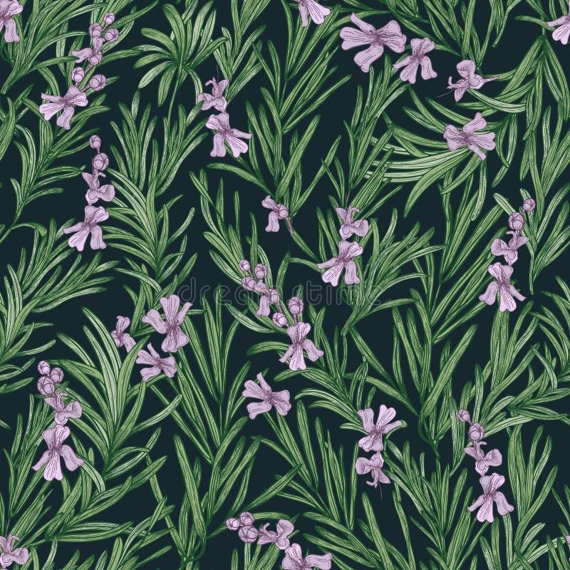 Bloemen naadloos patroon met bloeiende rozemarijn op zwarte achtergrond Achtergrond met wild aromatisch kruid botanische vector royalty-vrije illustratie