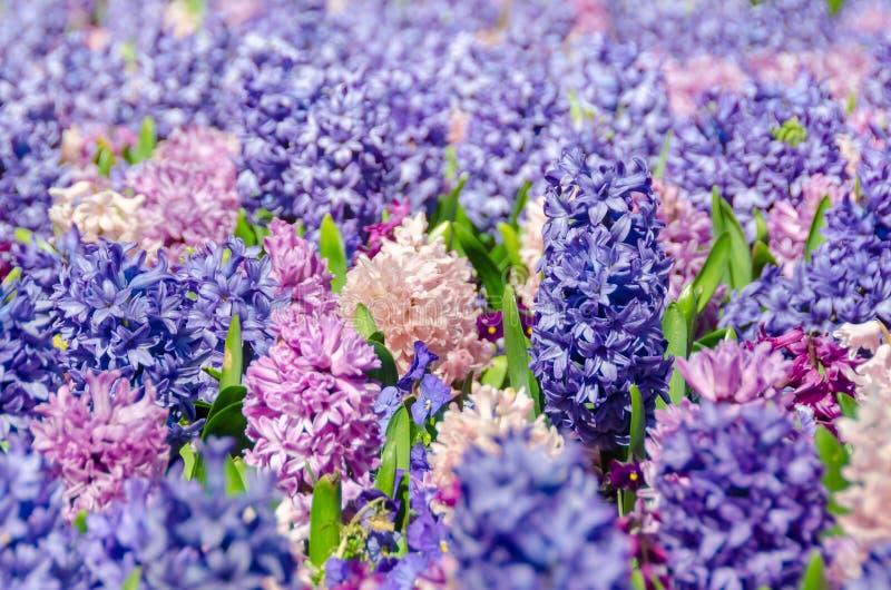 Bloemen in Nashville stock afbeelding