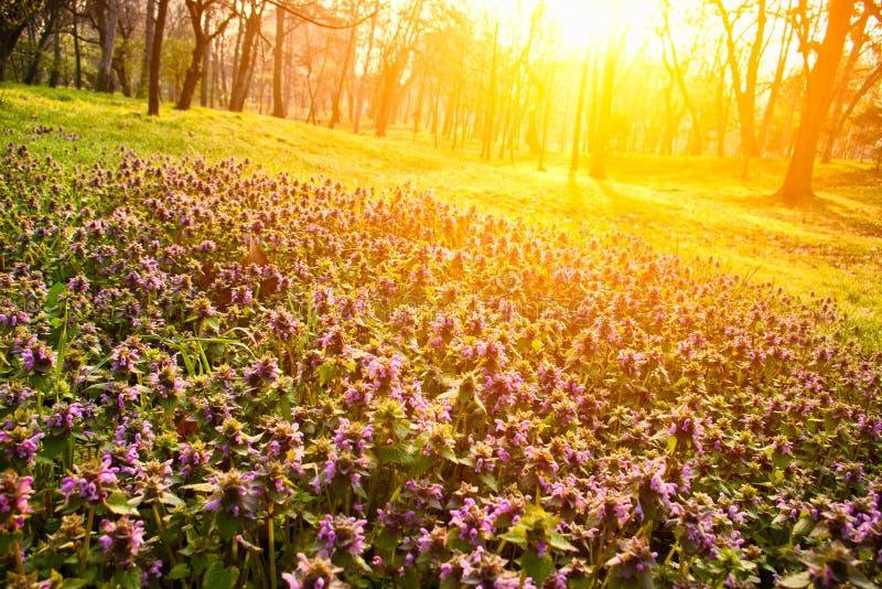 Bloemen in ochtendlicht royalty-vrije stock afbeeldingen