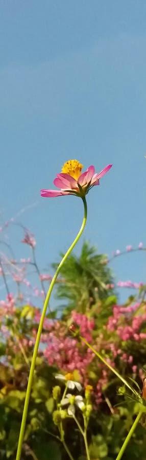 Bloemen onder de blauwe hemel royalty-vrije stock afbeeldingen