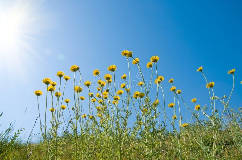 Bloemen onder zon stock afbeeldingen