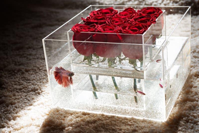 Bloemen ontwerp? achtergrond, achtergrond, illustratie Aanwezige de Dag van de valentijnskaart rood nam boeket in doos toe Aquari royalty-vrije stock foto
