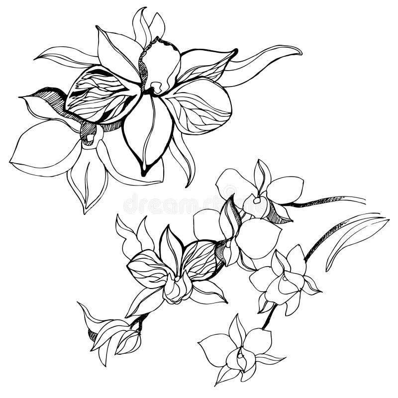 Bloemen ontwerpelementen royalty-vrije illustratie