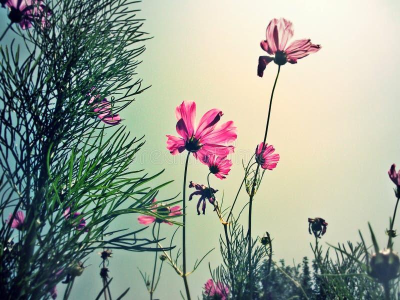 Bloemen in onze tuin stock foto