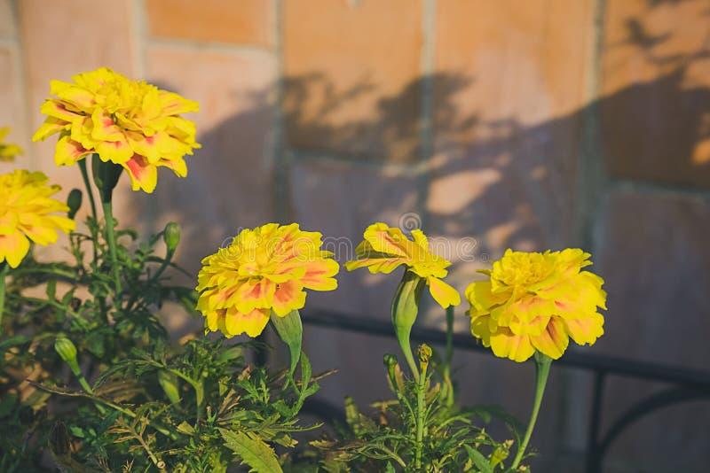 Bloemen op bakstenen muurachtergrond royalty-vrije stock afbeeldingen