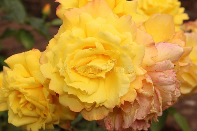 Bloemen op criffel stock afbeeldingen