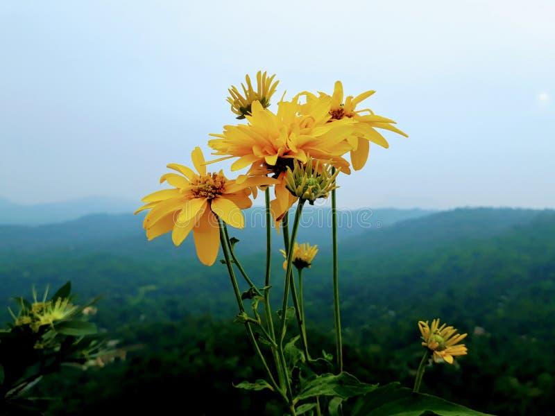 Bloemen op de bovenkant van berg stock afbeelding