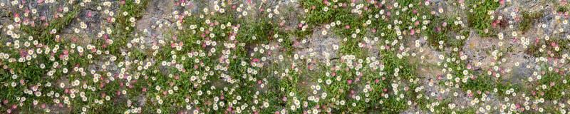 bloemen op de muur stock foto's