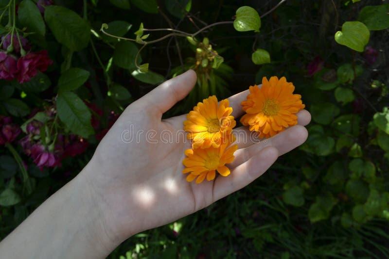 Bloemen op de palm stock afbeelding