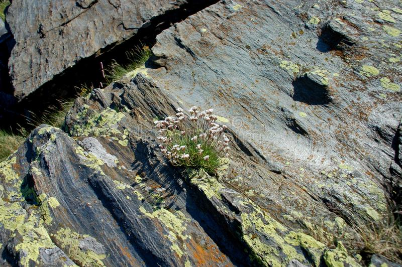 Bloemen op de rotstextuur met goed detail stock foto's