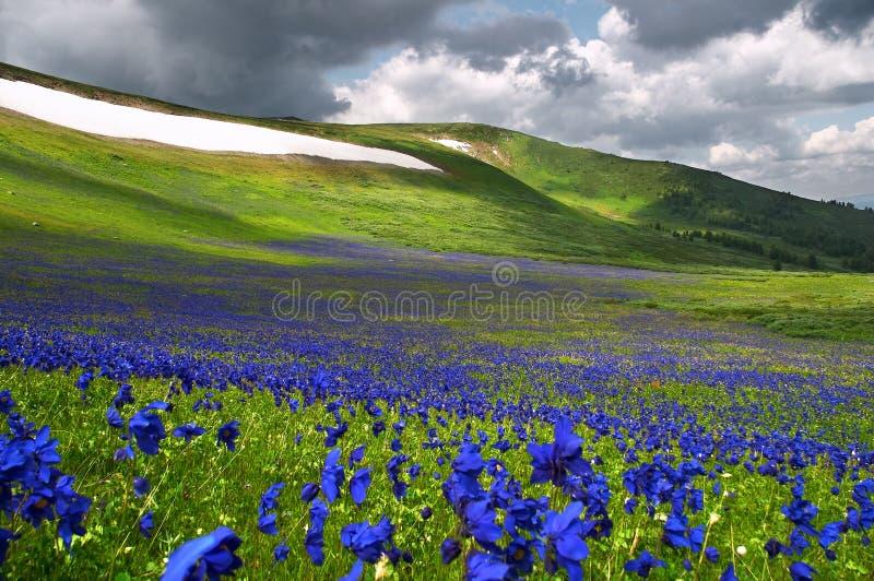 Bloemen op de Sneeuw stock foto