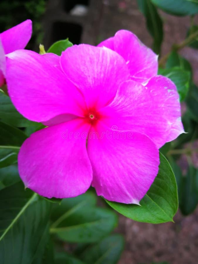 Bloemen op de straat stock foto's