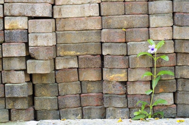 Bloemen op een Bakstenen muur royalty-vrije stock fotografie