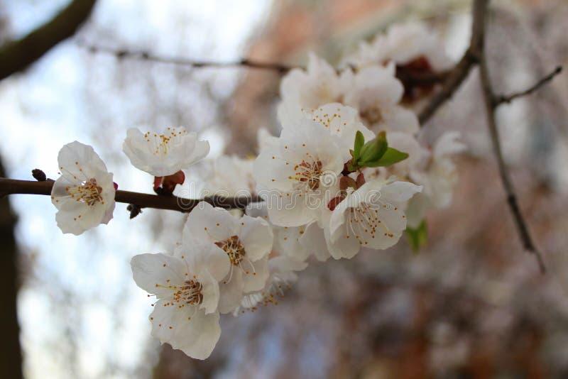 Bloemen op een boom stock afbeelding