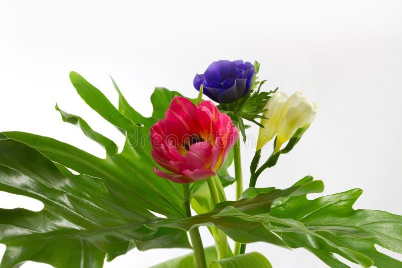 Download Bloemen op een groot blad stock afbeelding. Afbeelding bestaande uit vrolijk - 29504137