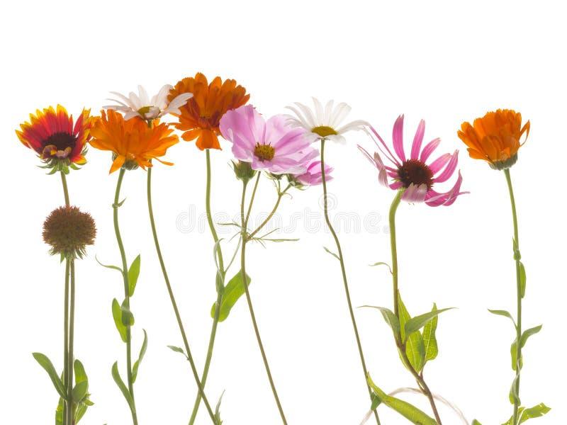 Bloemen op een witte achtergrond stock afbeeldingen