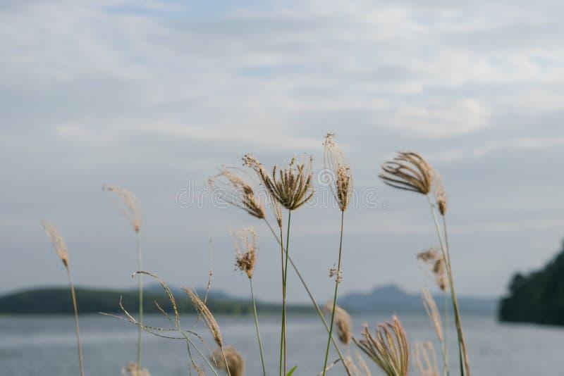 Bloemen op het meer in de ochtend royalty-vrije stock foto