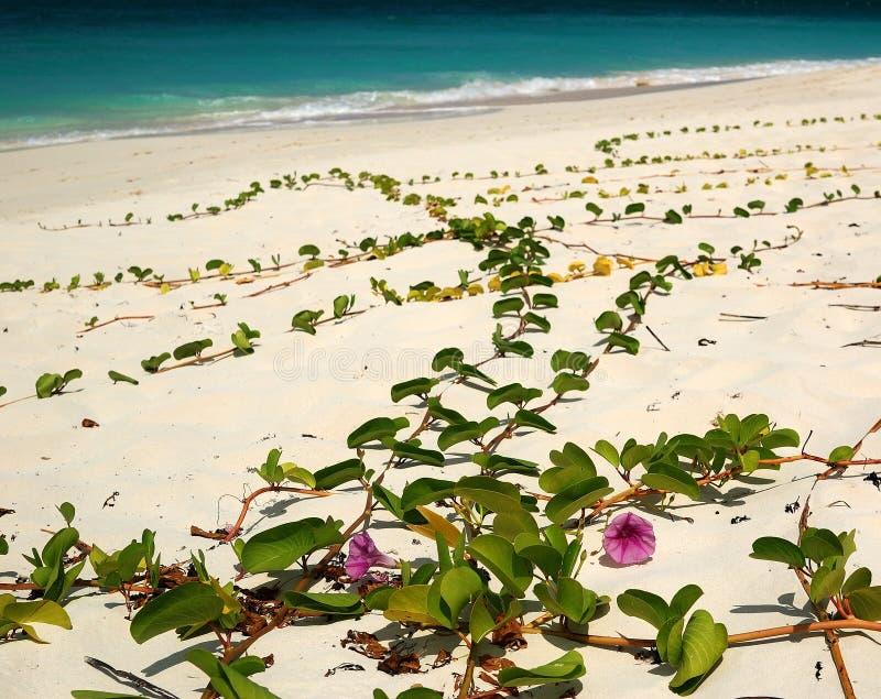 Bloemen op het Strand royalty-vrije stock afbeeldingen
