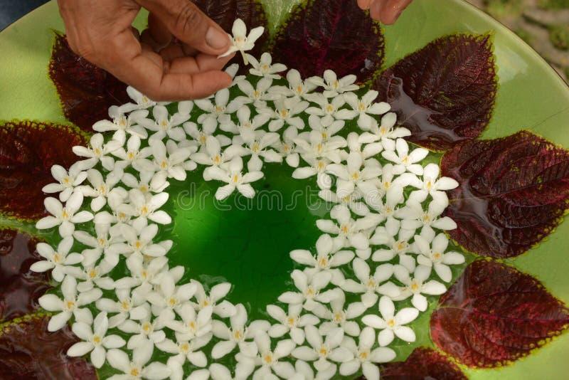 Bloemen op het water royalty-vrije stock foto's