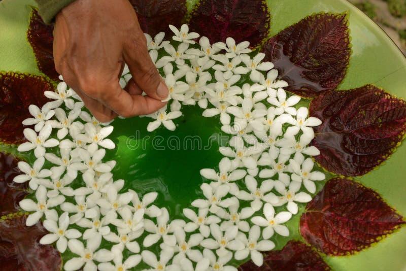 Bloemen op het water royalty-vrije stock foto