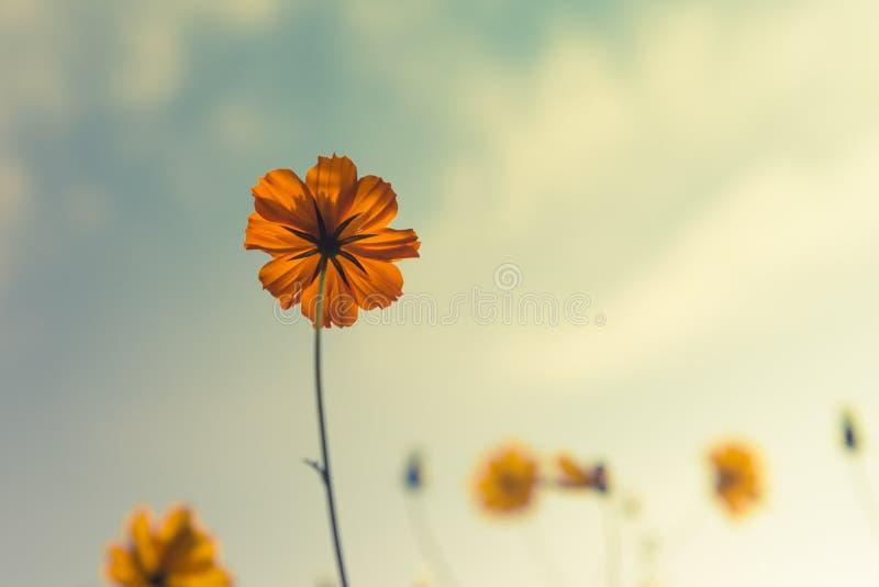 Bloemen op licht royalty-vrije stock afbeelding