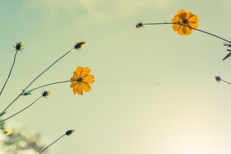 Bloemen op lichtblauwe sjofele pastelkleur stock foto