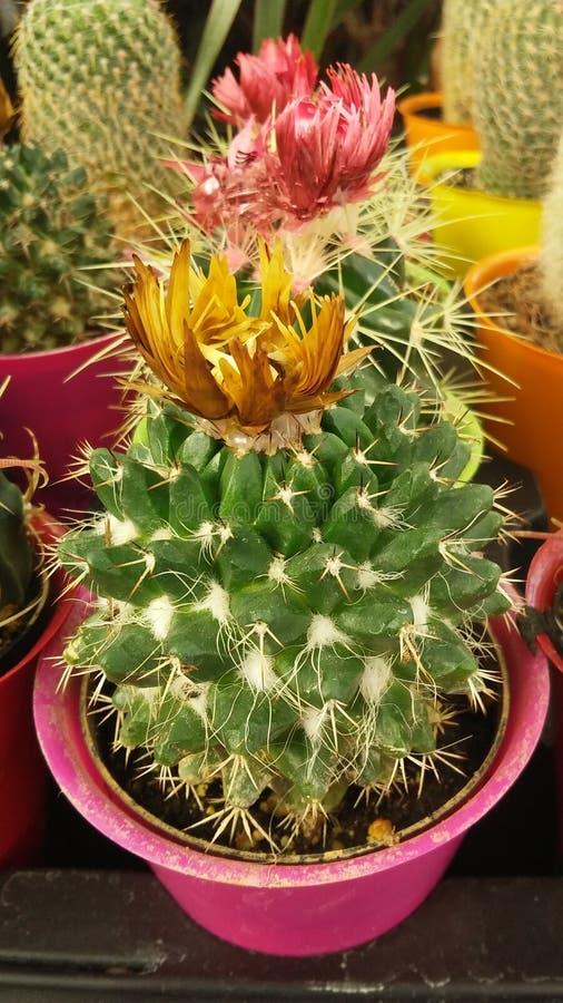 Bloemen op pic royalty-vrije stock fotografie