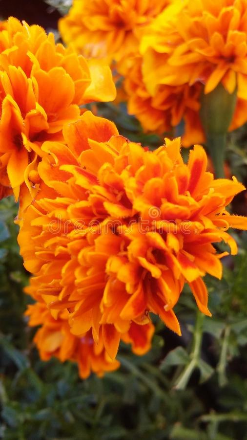 Bloemen op pic stock afbeeldingen