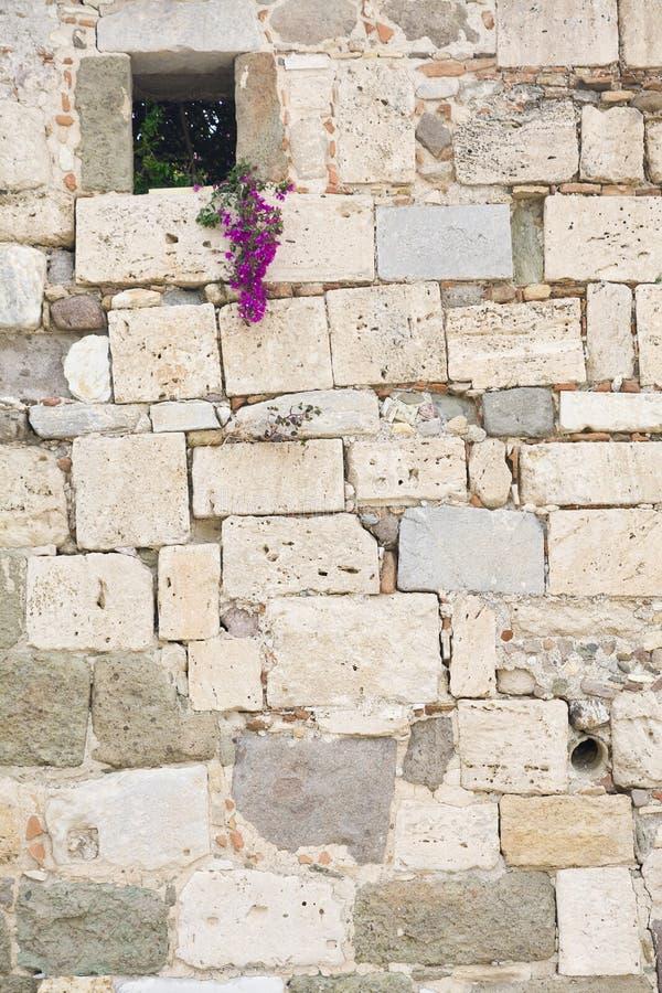 Bloemen op steenmuur royalty-vrije stock foto