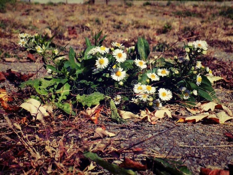 Bloemen op tijd Gecementeerde Fauna royalty-vrije stock afbeelding
