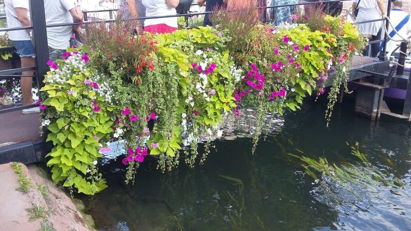 Bloemen op waterweg royalty-vrije stock afbeeldingen