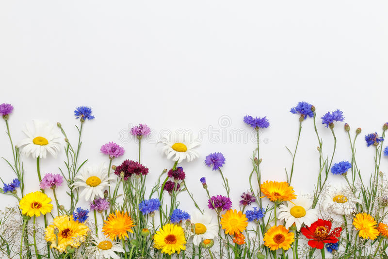 Bloemen op witte achtergrond De hoogste vlakke mening, legt stock afbeeldingen
