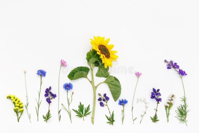 Bloemen op witte achtergrond De hoogste vlakke mening, legt royalty-vrije stock afbeeldingen