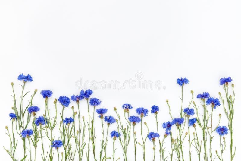 Bloemen op witte achtergrond De hoogste vlakke mening, legt stock foto