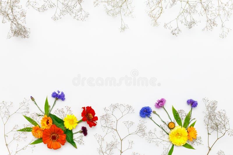 Bloemen op witte achtergrond De hoogste vlakke mening, legt royalty-vrije stock fotografie