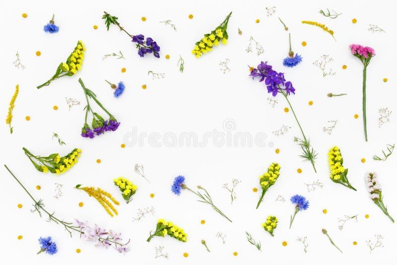 Bloemen op witte achtergrond De hoogste vlakke mening, legt stock fotografie